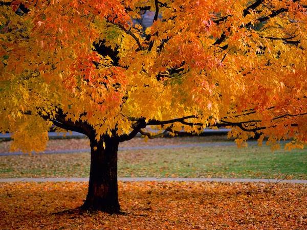 Conseils pour un automne serein et en pleine forme